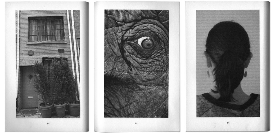 Photographs In The Novel Extremely Loud And Incredibly Close Zo